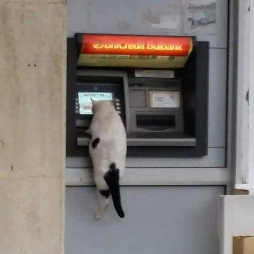 Cây ATM không thân thiện với động vật.