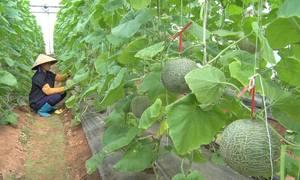 Nông dân ứng dụng công nghệ cao làm nông nghiệp