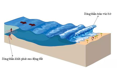 Sóng thần thường trở nên cao hơn khi tiến gần bờ biển. Đồ họa: Vox.