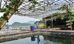 Nuôi cá đặc sản kết hợp làm du lịch ở lòng hồ thủy điện