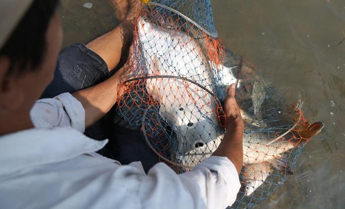 Người dân đổ xô bắt cá khủng dưới đập thủy điện Trị An