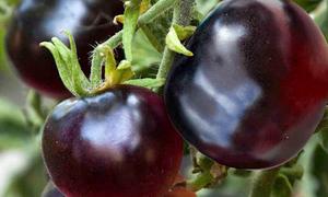 Những loại nông sản đắt đỏ xuống giá khi được nội địa hóa