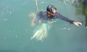 Cá bớp chết hàng loạt, nông dân Quảng Ngãi bán rẻ