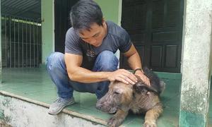 Chàng trai cưu mang hàng trăm con chó bị bỏ rơi