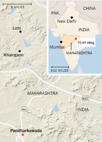 Vị trí của Pandharkawada. Đồ họa: NYTimes.