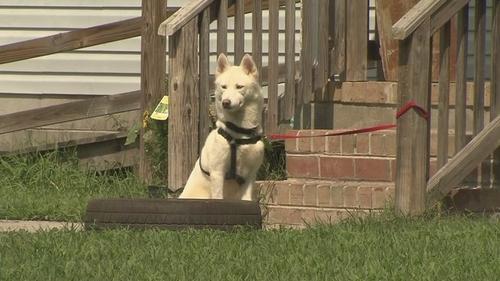 Xích chó vào hiên nhà có thể vi phạm pháp luật của Mỹ. Ảnh: Wavy.