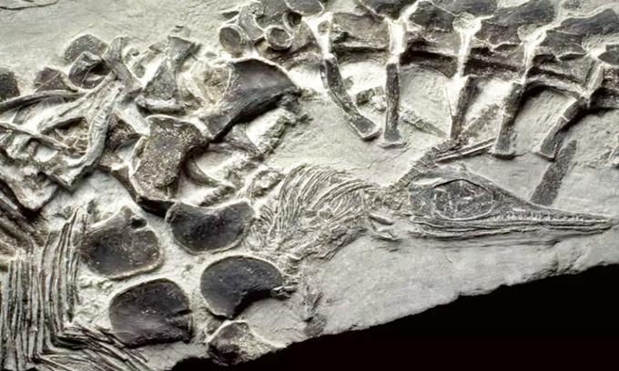 Những hóa thạch gây kinh ngạc trong lịch sử