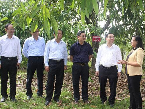 Đoàn công tác thăm mô hình cây xoài nhà tôi. Ảnh: Trung tâm truyền thông.