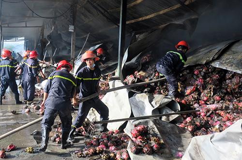 Cảnh sát cứu hỏa nỗ lực cứu kho thanh long bốc cháy. Ảnh: Tư Huynh.