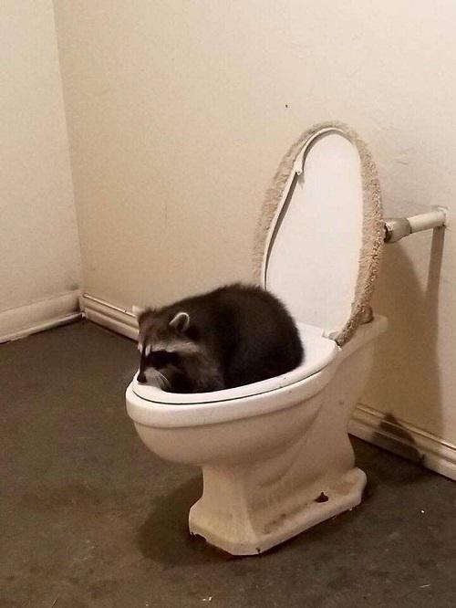 Đi vệ sinh kiểu cáo mèo.