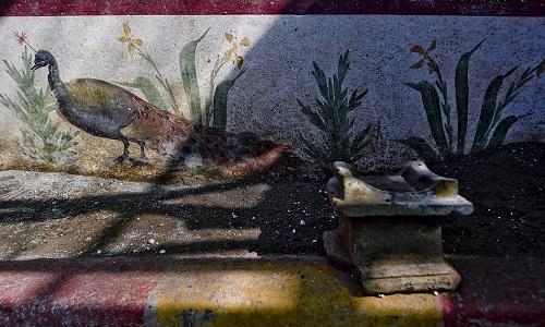 Con chim công được vẽ sát chân tường để tạo cảm giác như đang đi trên mặt đất. Ảnh: AP.