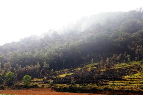 Một góc rừng phòng hộ Sóc Sơn, Hà Nội. Ảnh: Gia Chính.