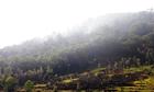 Hà Nội thanh tra việc sử dụng đất rừng tại Sóc Sơn