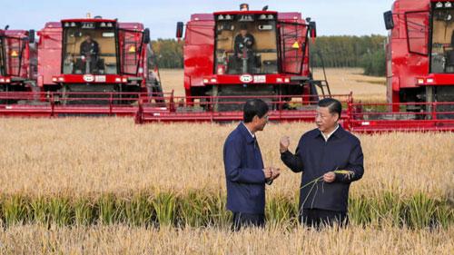 Ông Tập (phải) đến thăm một nông trường ở tỉnh Hắc Long Giang hồi tháng 9. Ảnh: Reuters.