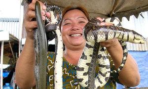 Chợ rắn, cá gần biên giới Campuchia tấp nập mùa nước lũ