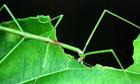 Tại sao nhiều sinh vật có thể đổi màu, hình dạng để cải trang?