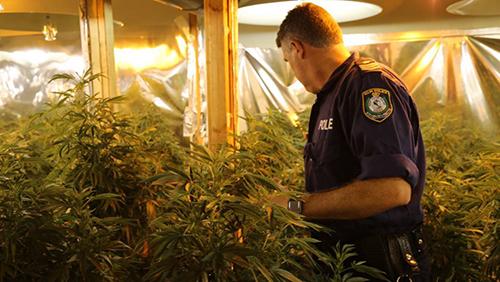 Cảnh sát khám xét tại một trong các căn nhà trồng cần sa của băng nhóm người Việt tại thành phố Maitland, bang New South Wales, Australia. Ảnh: The Herald