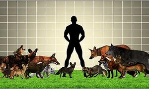 Loài họ Chó hoang dã nào có kích thước lớn nhất?