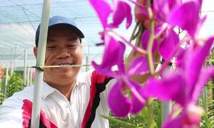 Vườn lan Mokara 7.000m2 của nông dân Sài Gòn