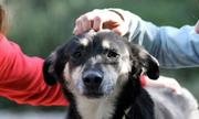 Chó ngoan hay hư tùy và o chủ nhân nuôi nấng hay bỠmặc