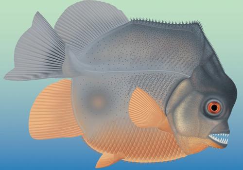 Cá Piranhamesodon pinnatomus sở hữuhàm răng sắc nhọn. Ảnh: Reuters.