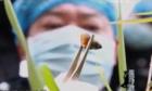 Đống vỏ ốc tố giác hung thủ vứt xác nữ tài xế taxi