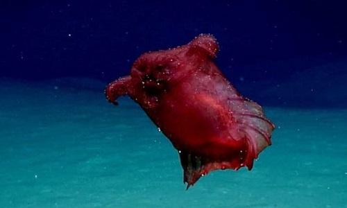 Phát hiện 'quái vật gà không đầu' ở biển Nam cực