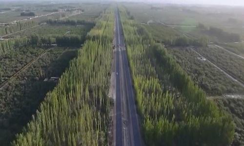 'Bức tường xanh' chặn bão cát trên sa mạc lớn nhất Trung Quốc