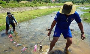 Bỏ sỏi vào lon nước ngọt để bắt cá chạch cát