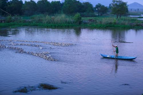 Một người dân lùa vịt ra đồng trên dòng kênh Vĩnh Tế vào buổi sớm. Ảnh: Thành Nguyễn