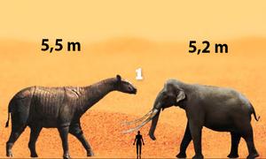 Những loài voi và tê giác lớn nhất từng tồn tại