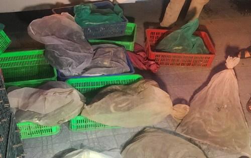 Hàng trăm con rắn theo xe giường nằm ra Hà Nội