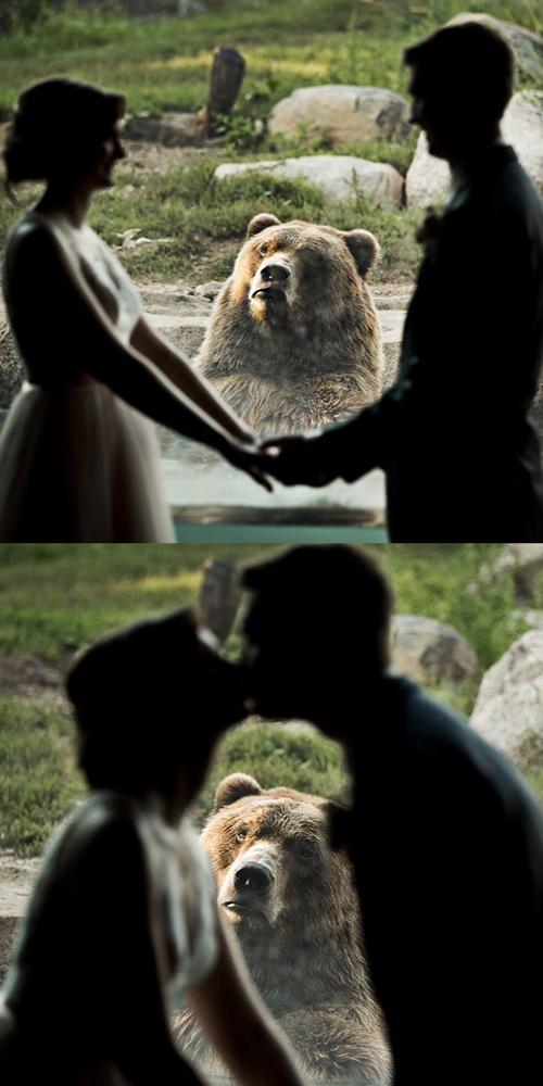 Buồn của gấu.