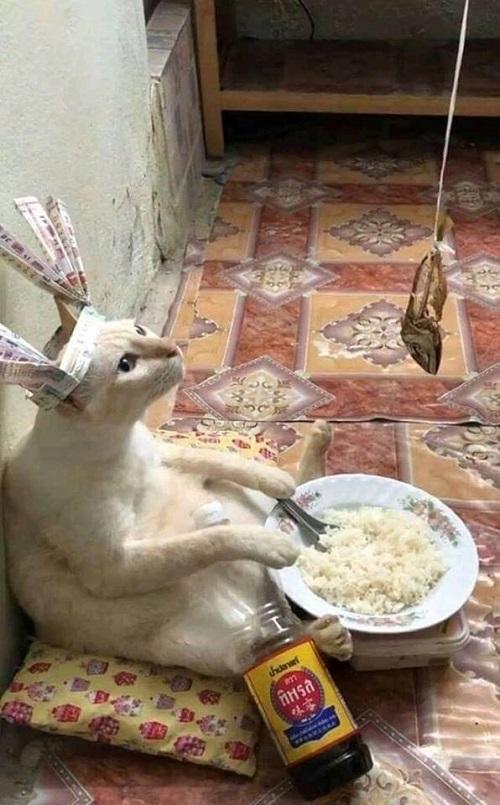 Bí kíp ăn uống tiết kiệm.