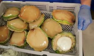 Hải sản tiền triệu nhập khẩu phục vụ người Việt
