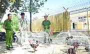 Trường gà quy mô lớn nhất Thừa Thiên - Huế bị công an triệt phá