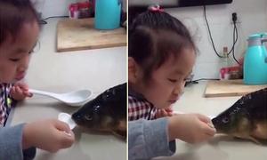 Bé gái Trung Quốc bón nước cho cá sắp bị làm thịt