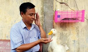 Người đàn ông ở Cà Mau nuôi vịt làm thú cưng