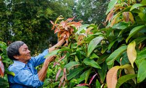 Trồng rau rừng kiếm 200 triệu đồng mỗi năm ở Tây Ninh