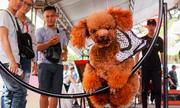 Hàng trăm chú cún tranh tài trong ngày hội thú cưng ở Sài Gòn