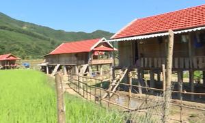 Các hộ dân vùng sạt lở ở Quảng Ngãi phải làm nhà dưới ruộng