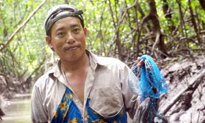 Mang giày vải bắt cá thòi lòi trong rừng đước Cà Mau