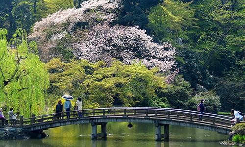 Vườn Quốc gia Shinjuku Gyoen ở Tokyo, Nhật Bản. Ảnh: Multianime