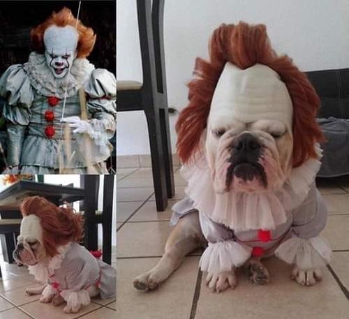 Chàng hề ma quái phiên bản cún cưng.