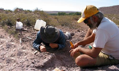Hóa thạch được khai quậttại vùng trung tâm Argentina. Ảnh: AFP.