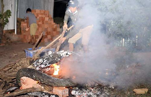 Người dân đốt con trăntiêu hủy trong đêm 3/11. Ảnh: Phước Tuấn.