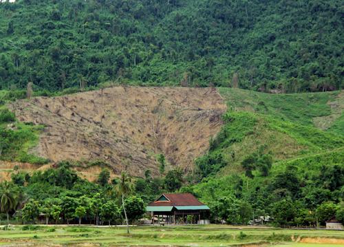 Một cánh rừng ở xã Phúc Sơn (huyện Anh Sơn) nơi đàn voi rừng từng quay trở lại. Ảnh: Hiến Tùng.