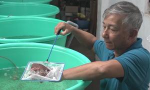 Lão nông Sài Gòn thu tiền triệu mỗi ngày nhờ nuôi Artemia