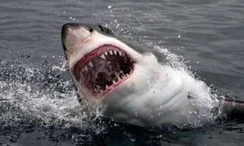 Đã có hai vụ cá mập tấn công liên tiếp hồi tháng 9 tại khu vực mà nạn nhân bơi vào ngày 5/11. Ảnh: Sky News.