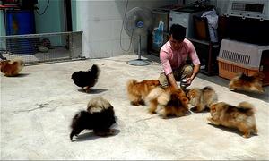 Đàn chó cảnh tiền tỷ của người đàn ông ở Sài Gòn